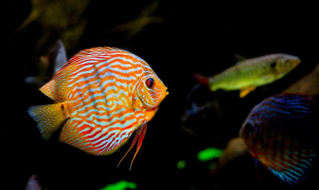 plovoucí ryba